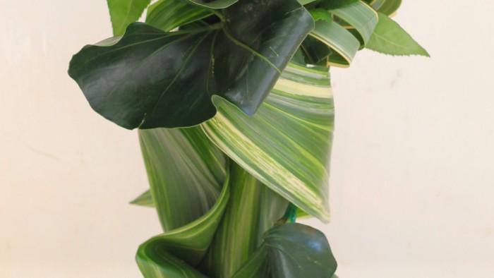 葉のデフォルメ