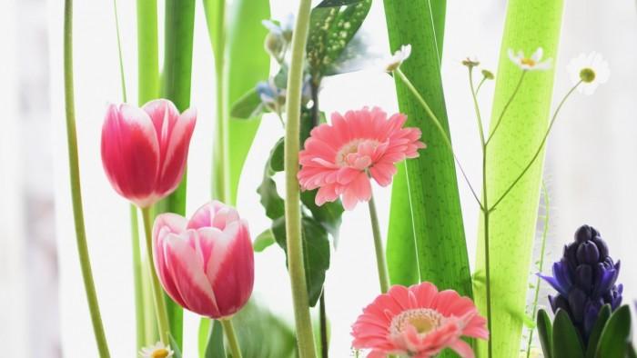 春のお庭が出来ました