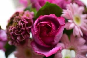 香りのバラ イブピアッチェ